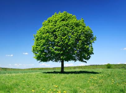 Environmental Search